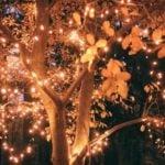Garden tree lights