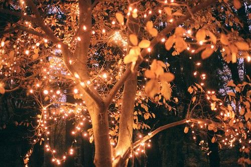 Garden tree lights