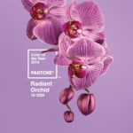 2014 Color of the Year – Ready for Radiant?