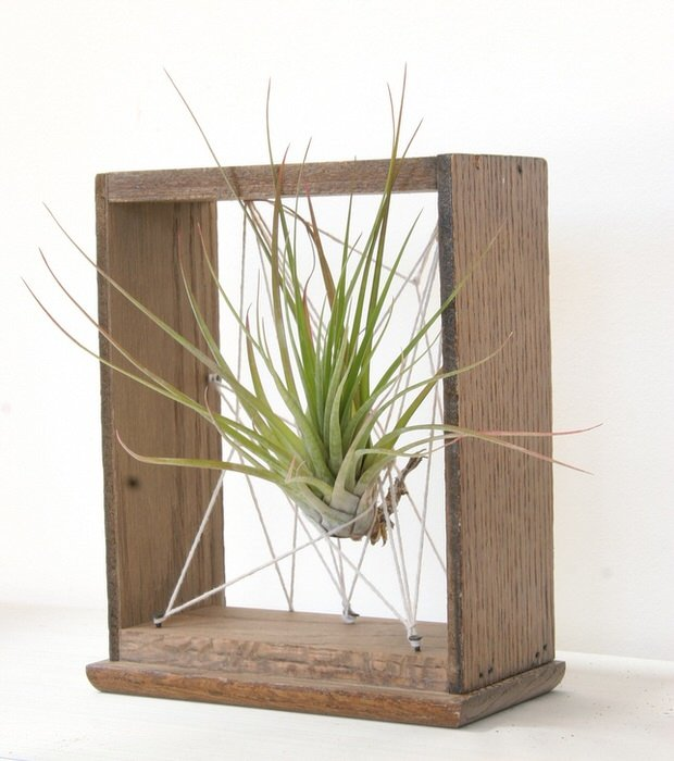 Creative ways to decorate with air plants decorating for Air plant holder ideas