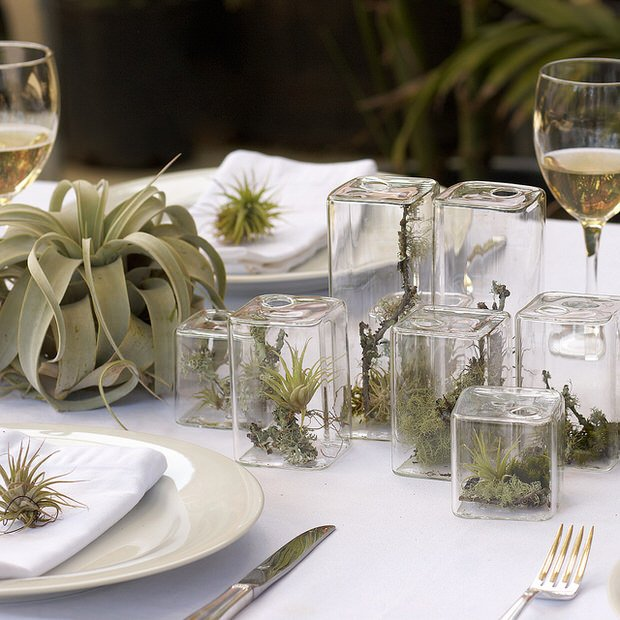 Creative ways to decorate with air plants decorating for Air plant decoration
