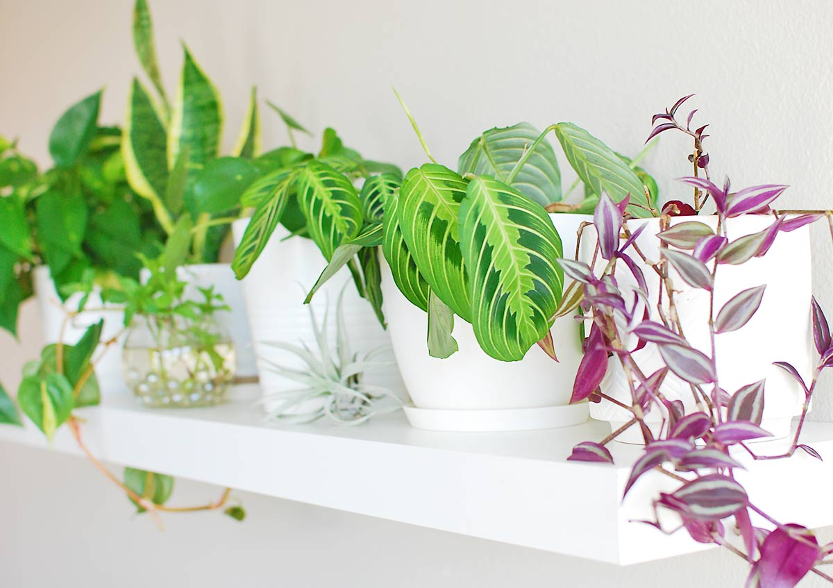 13 Indoor Plant Shelf Ideas You Ll Want To Copy Now Ohmeohmy Blog