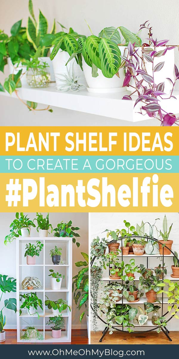 13 Indoor Plant Shelf Ideas You'll Want To Copy Now!